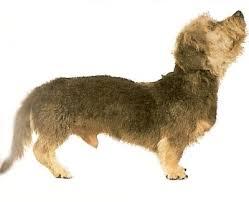Dandie Dinmont Terrier Clipper Blades